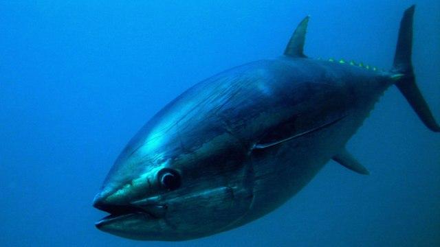 рыбалка на тунца на Кипре