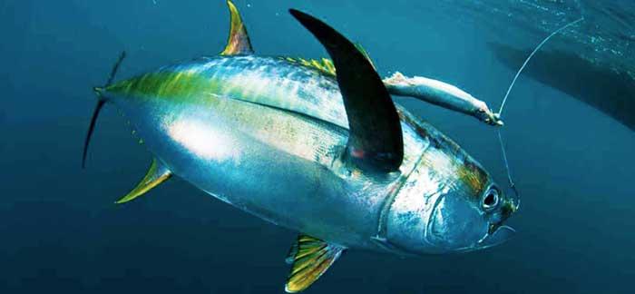морская рыбалка на Кипре
